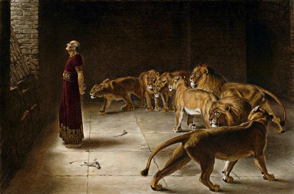 Daniel lion